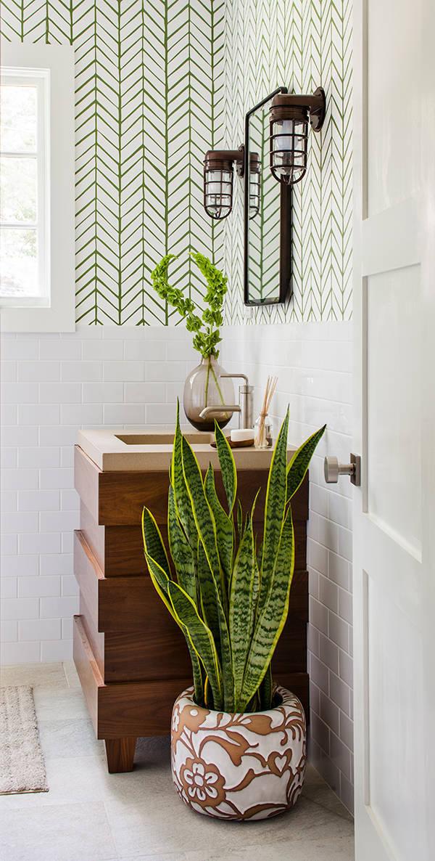 Grün liegt im Trend: Die 5 besten Zimmerpflanzen