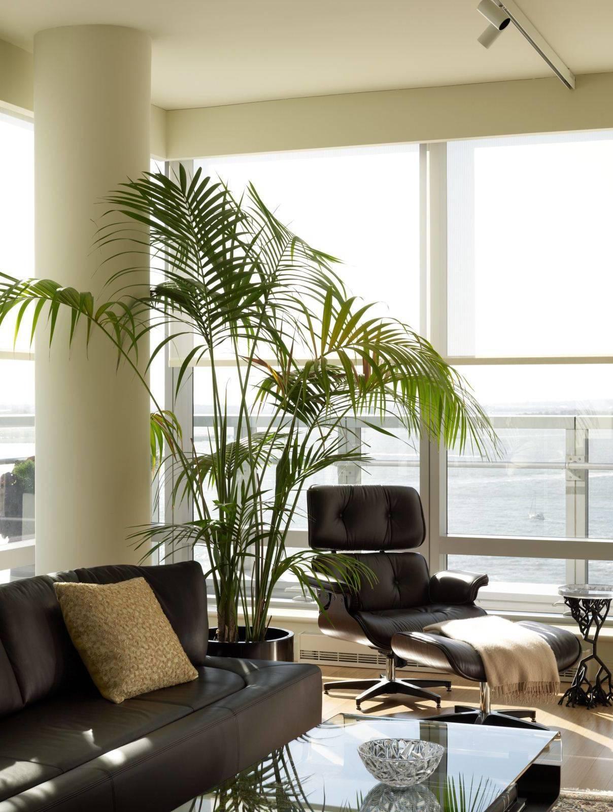 Große Zimmerpflanzen als Akzent