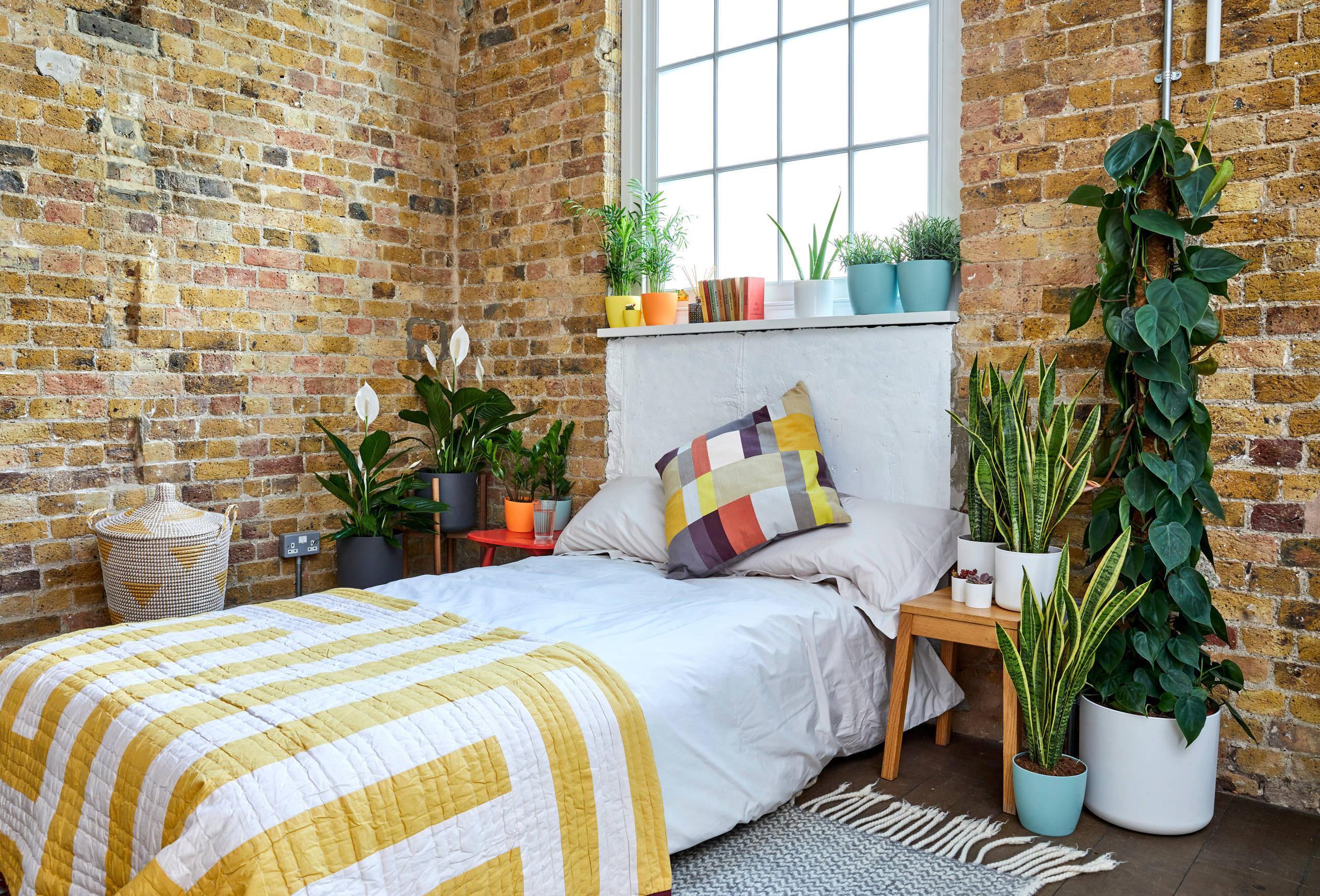Pflegeleicht und fantasievoll - 5 Zimmerpflanzen, die keine grünen Daumen erfordern